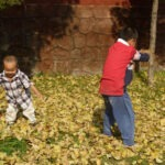 K6 Playing with fallen leaves